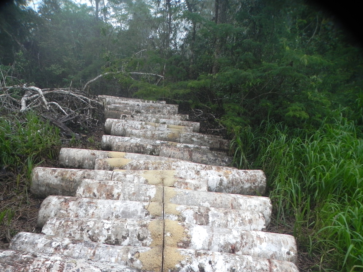 Illegally cut logs found in 2013 on the Tapiche Reserve in the Peruvian Amazon. The reserve functions as a tourism business and wildlife refuge, but like other privately owned conservation areas in the region, it is threatened by illegal logging, hunting, and fishing. The reserve's owner cut the logs across the middle to render them unfit for sale, hoping to discourage future incursions. Photo courtesy of Tapiche Reserve.