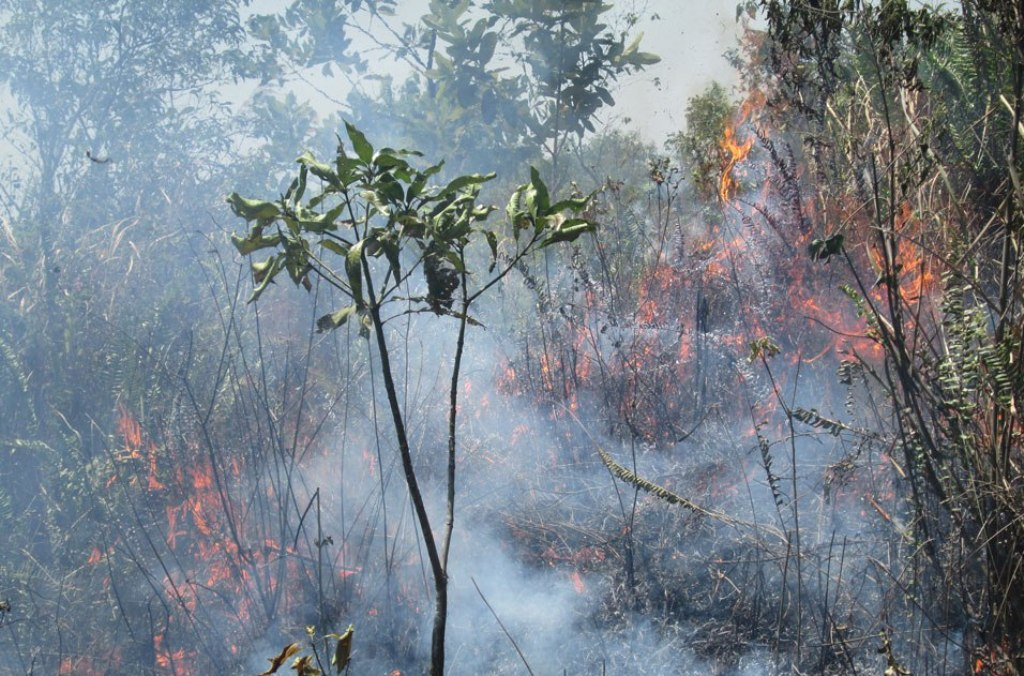 A fire on Mount Lemongan in East Java. Forests on the mountain began to burn in September amid the ongoing drought. Photo by Petrus Riski