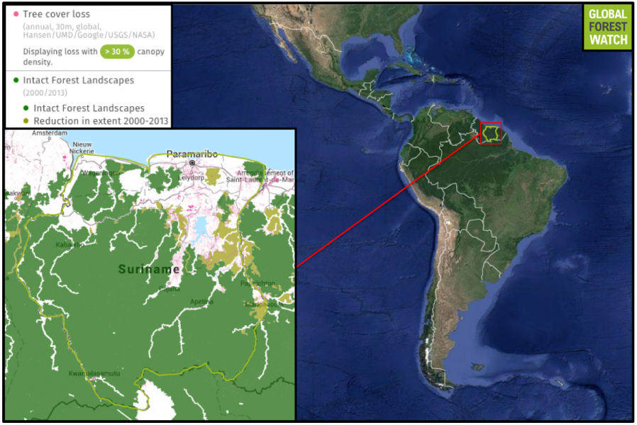 Compared to many other South American countries, Suriname still holds much of its forest cover. According to Global Forest Watch, Suriname lost 0.7 percent of its tree cover from 2001 through 2014 - a small proportion compared to Brazil's 6.9 percent. However, Suriname's intact forest landscapes - large, continuous areas of primary forest - do show degradation since 2000.