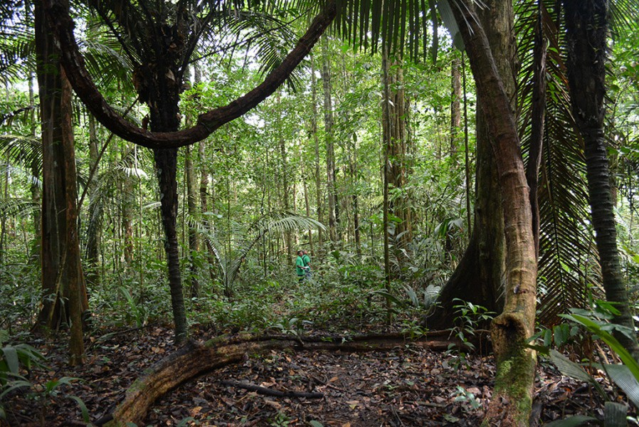 Suriname rainforest. Photo courtesy of the Amazon Conservation Team.