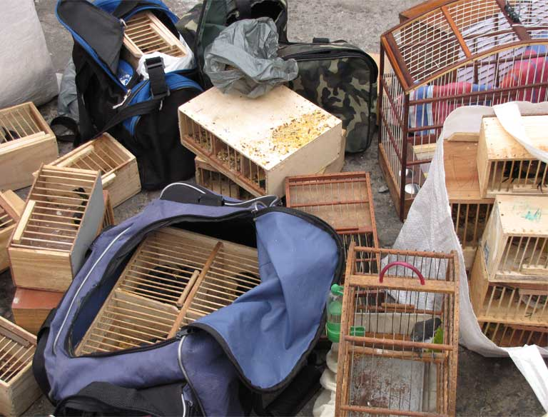 """Cages and bags used to carry trafficked wild birds seized at the Vila Mara street market, Sao Paolo. """"The mega business of illegal wildlife trafficking threatens Brazil's mega biodiversity more every day,"""" says Machado Ferreira. """"We must turn the tide now — before it's too late."""" Photo by Juliana M Ferreira"""