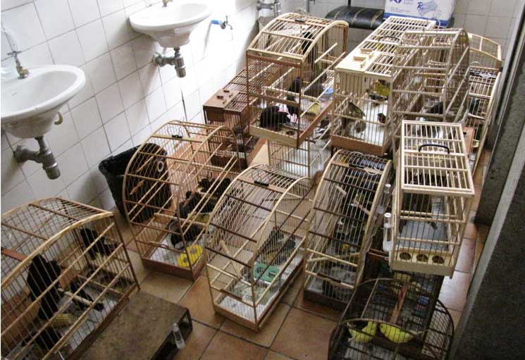 Cages and bags used to carry trafficked wild birds seized at the Vila Mara street market, São Paulo, that were taken to the Police. Photo by Juliana M Ferreira