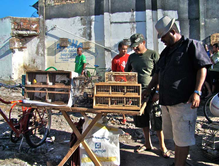 Fairs and small markets scattered throughout the country are one of the main venues where animals are trafficked. Between 60% and 70% of the trafficked animals in Brazil are purchased by Brazilians. Photo by Juliana M Ferreira
