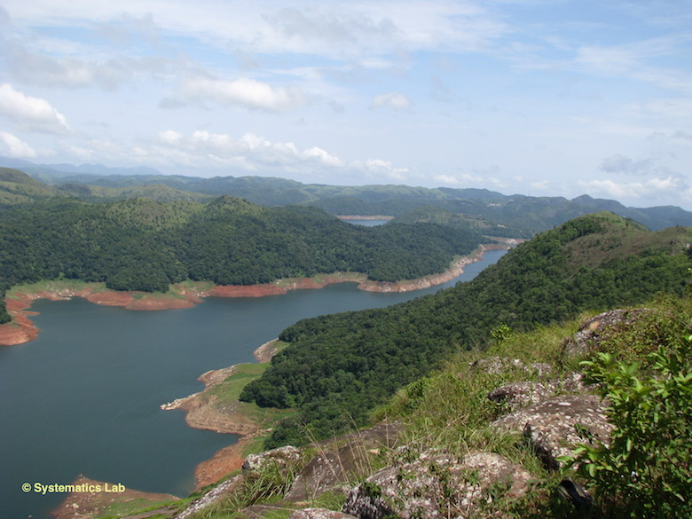 Typical mountainous habitat of the purple frog in the Western Ghats of South India. Photo courtesy of Systematics Lab.