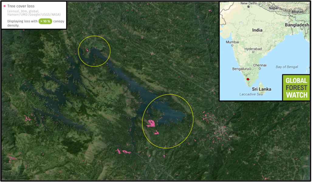 The purple frog is known primarily from two sites along the Idukki Reservoir (indicated by yellow circles). Habitat loss is the species' main threat , and Global Forest Watch shows the two circled sites lost 4 percent of their tree cover from 2001 through 2014 alone.