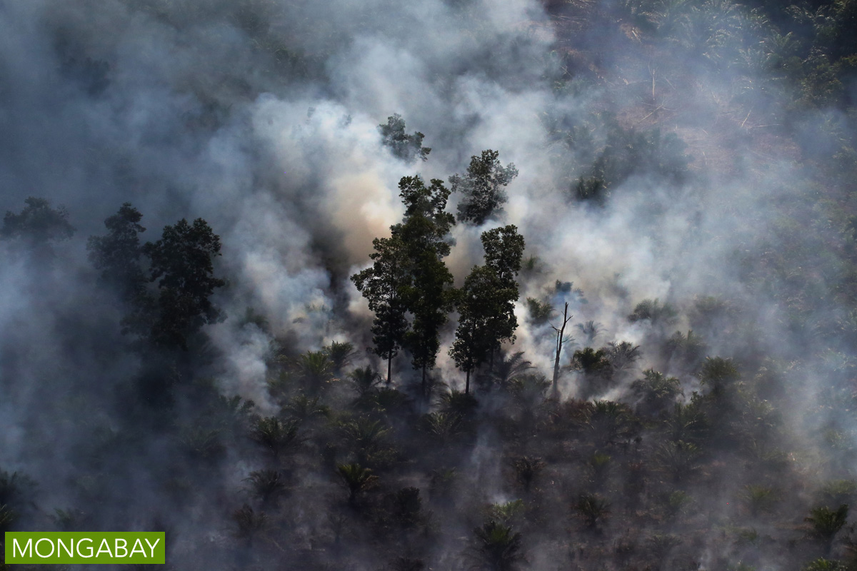 Smoke rising from an area of forest and oil palm in Riau in June 2015. Photo by Rhett A. Butler