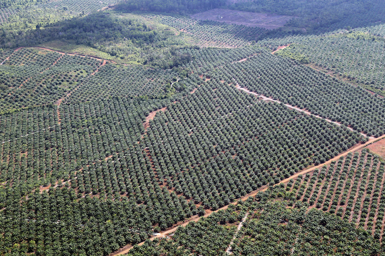A large palm oil plantation in southern Palawan. Photo by an anonymous source.