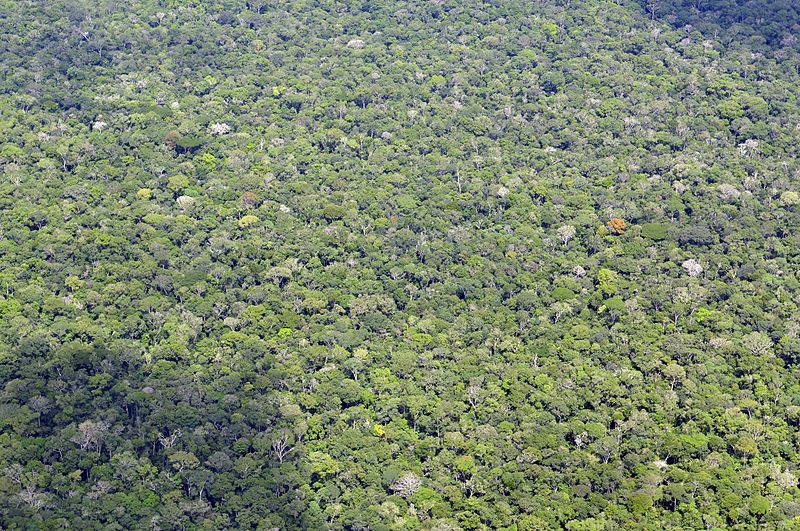 Unfragmented Brazillian Amazon rainforest. Photo by Neil Palmer/CIAT licensed under the Creative Commons Attribution-Share Alike 2.0