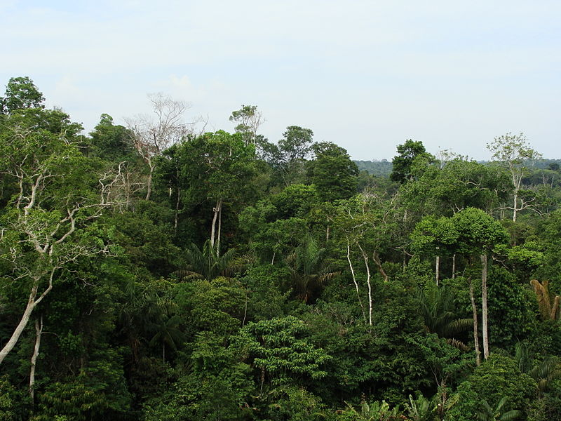 Brazil's rainforest canopy. Photo by Ben Sutherland licensed under the Creative Commons Attribution 2.0