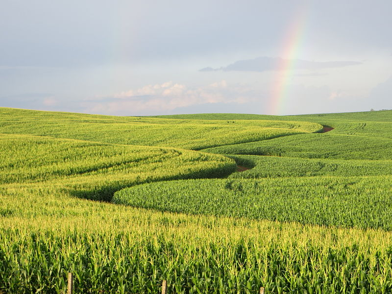 Brazil is the world's largest exporter of sugar, orange juice, coffee, beef, poultry and soybeans. Photo by Deyvid Aleksandr Raffo Setti licensed under the Creative Commons Attribution-Share Alike 3.0 Unported license