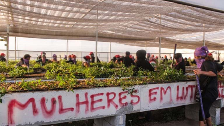 """March 2015 GM protest. A masked woman demonstrator stands beside a slogan that reads: """"Women in the Struggle"""". Nearly 1,000 women from Brazil's Landless Movement (MST) occupied an agricultural research institute to protest against the planned introduction of GM eucalyptus trees into Brazil, 5 March 2015. Photo courtesy of MST"""