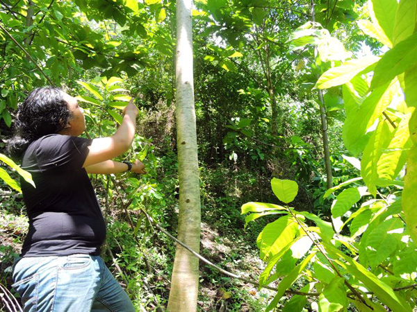 Ismail Hasan, a member of the Agroforestry Program