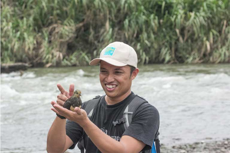 Iwan Hunowu of WCS Indonesia releases a freshly-hatched maleo chick at Bogani Nani Wartabone National Park in Sulawesi, Indonesia. Photo by Matthew Leggett, WCS