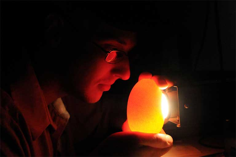 "Ken Huth of the Bronx Zoo uses a method called ""candling"" to examine a maleo egg for development. Photo by Julie Larsen Maher, WCS"