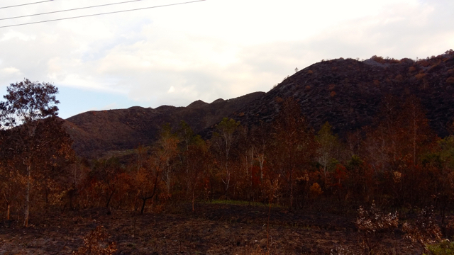 A burned forest in Wamena, a town in West Papua, is shown in August. Photo by Asrida Elisabeth