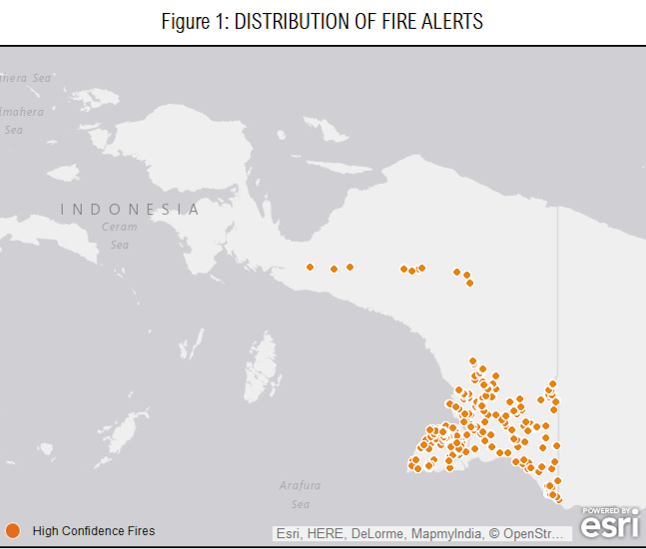 Global Forest Watch data shows hundreds of hotspots picked up by satellite in Papua. Image courtesy of Global Forest Watch Fires