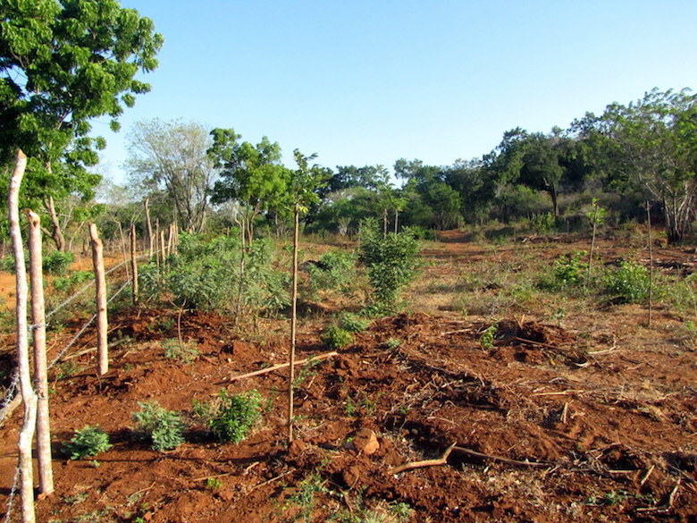 Clearing of forest in Amerawewa. Photo courtesy of Environmental Foundation Limited