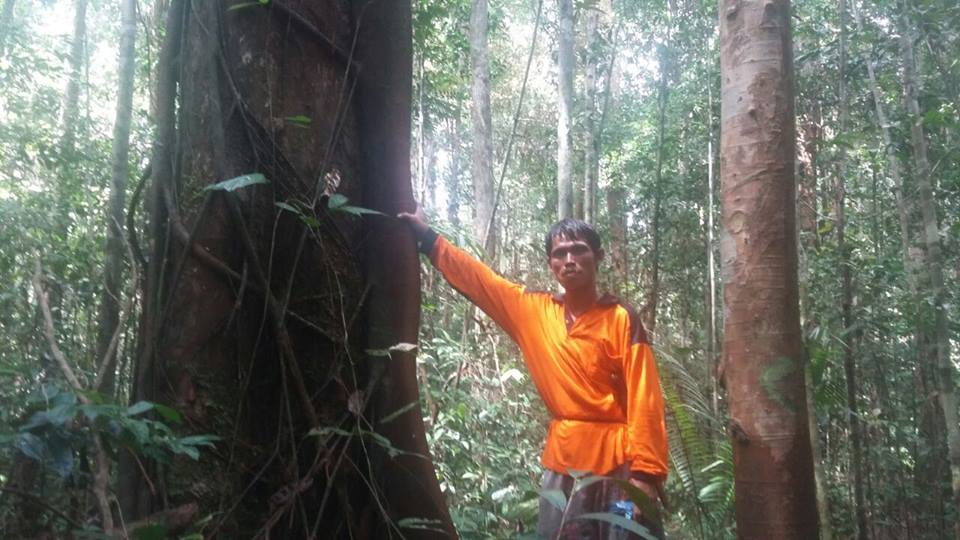 Redie, a resident of Mungku Baru, stands by an ulin tree in the forest. Photo by Indra Nugraha