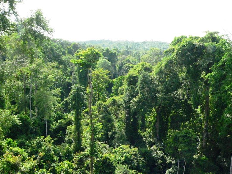 Ghana rainforest in Kakum National Park. Photo by Nicole Arcilla.