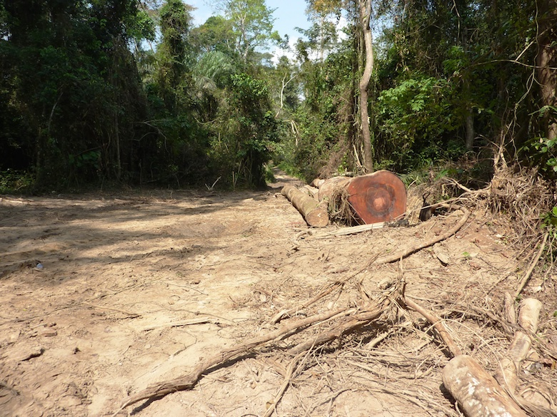 Logging waste Nkrabia Forest Reserve. Photo by Nicole Arcilla.