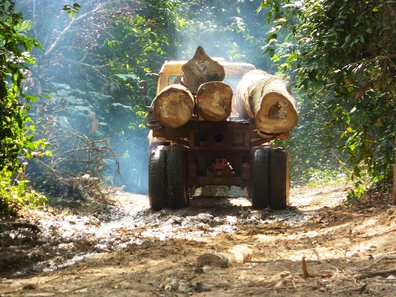 A logging truck transporting felled trees out of Nkrabia Forest Reserve. Photo by Nicole Arcilla.