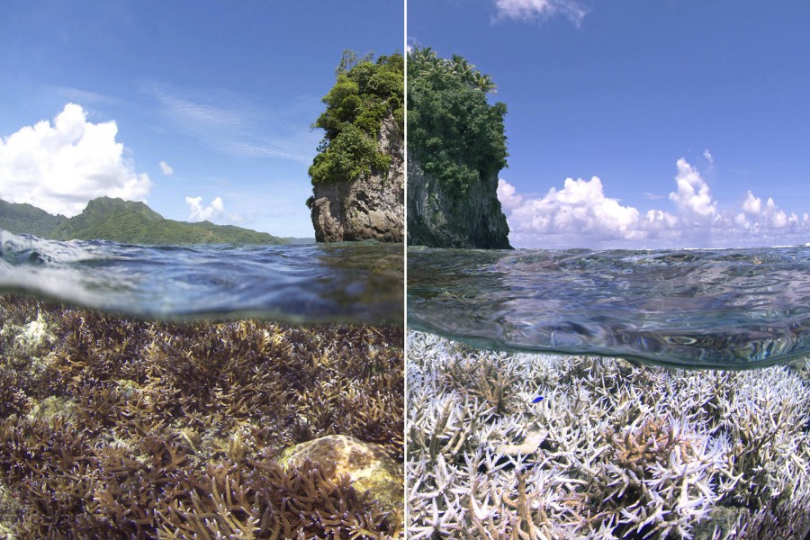 A before and after image of the bleaching in American Samoa. The first image was taken in December 2014. The second image was taken in February 2015 when the XL Catlin Seaview Survey responded to a NOAA coral bleaching alert. Photo by XL Catlin Seaview Survey.