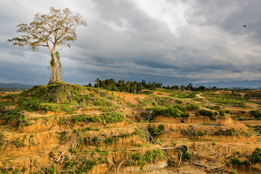 Photographic evidence of newly cleared forest inside the Leuser Ecosystem by palm oil company PT. Tualang Raya, Aceh Timur, August 2015. Photo: Paul Hilton for RAN