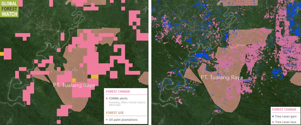 Two Global Forest Watch images showing near-term (left) and long-term (right) change in forest cover inside PT. Tualang Raya's concession.