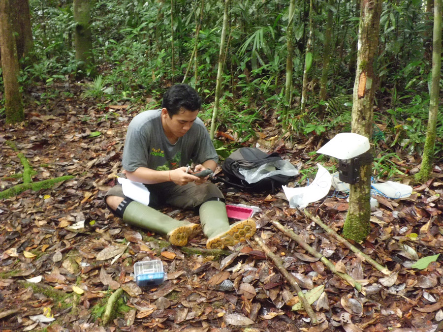 A local Wehea Forest ranger helping to collect data as part of his university education. Photo by Brent Loken
