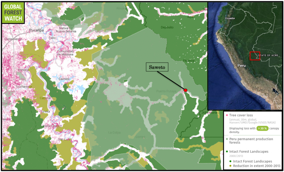 Global Forest Watch shows the community of Saweto is surrounded by large areas of primary forest called intact forest landscapes, much of which have been allotted for timber harvesting.