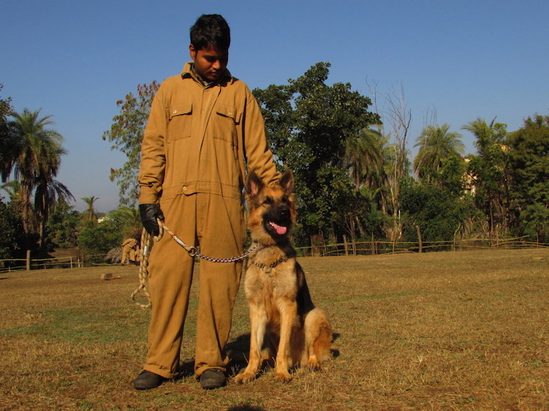 Sniffer dog Rana with his handler Prakash during training. The pair is now stationed at Bandipur Tiger Reserve in Karantaka. Photo by Shaleen Attre/TRAFFIC.