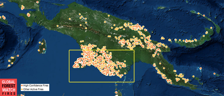 Global Forest Watch - Fires image showing MODIS hotspots for the past 7 days in New Guinea.