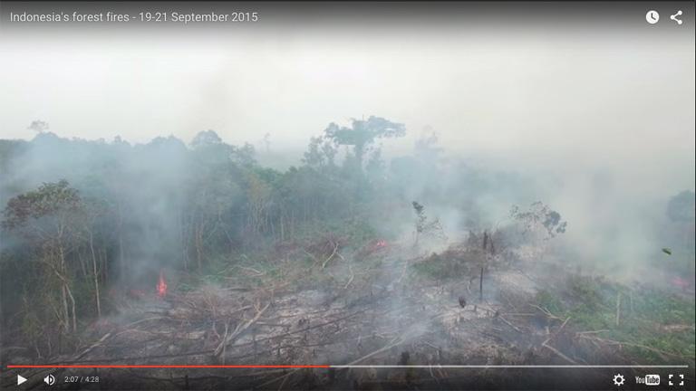 Screenshot from Greenpeace's UAV footage.