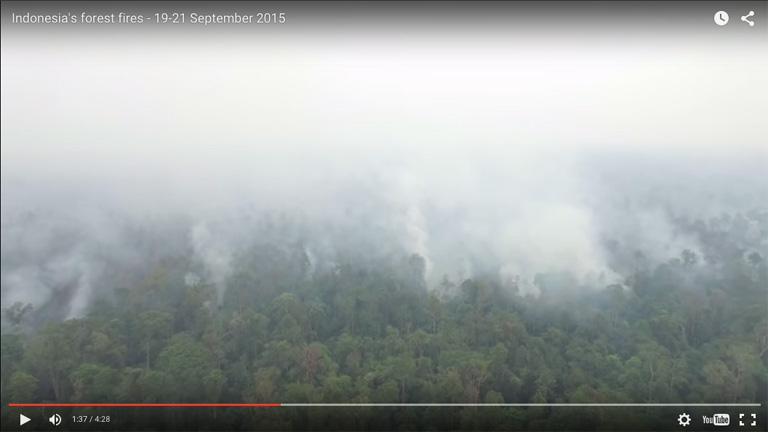 Screenshot from Greenpeace's drone video.