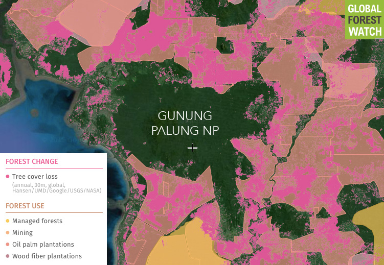 Global Forest Watch map showing concessions and recent forest loss around Gunung Palung National Park.