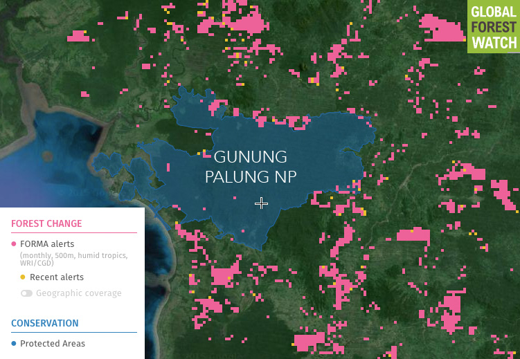 Global Forest Watch map showing Gunung Palung National Park and forest loss from the past 2 1/2 years.