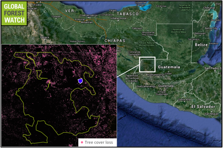 Global Forest Watch shows that the Cuchumatanes AZE site has lost 8985 hectares, or 4.2 percent, of tree cover between 2001 and 2012.