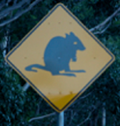 Bettong road sign. Photo courtesy of the Australian Department of Motor and Roads.