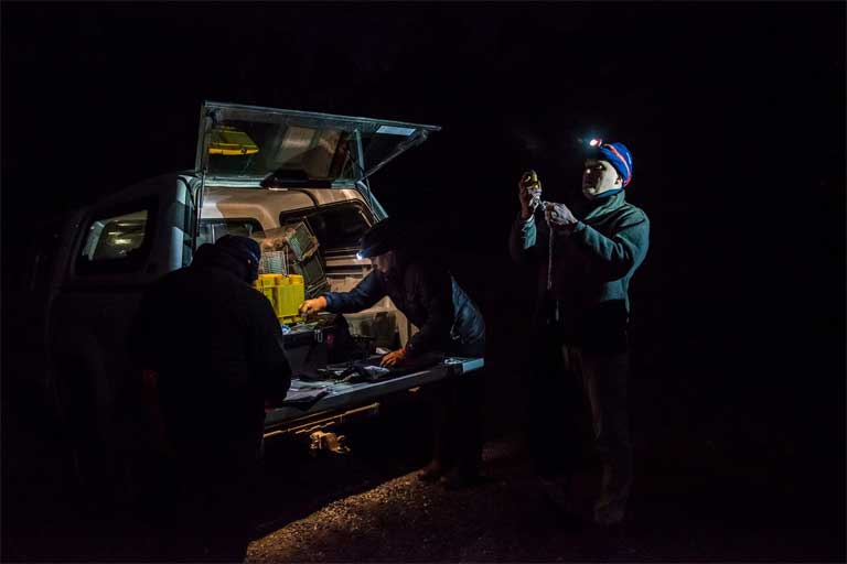 Scientists must work the night shift to observe nocturnal bettongs. Photo by Stephen Corey.