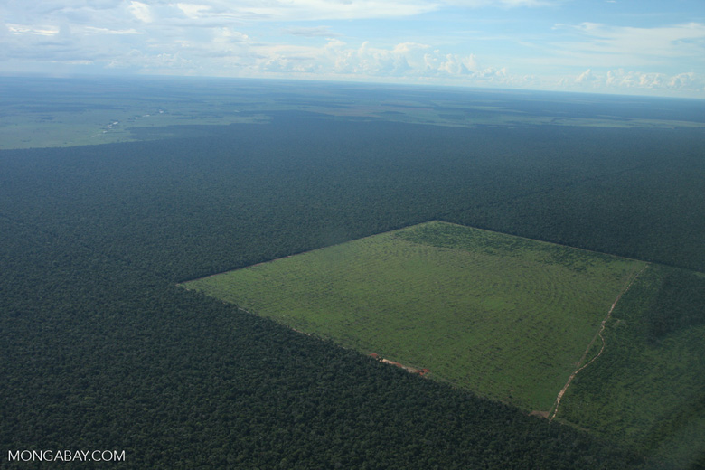 Forest cleared in Mato Grosso, Brazil.