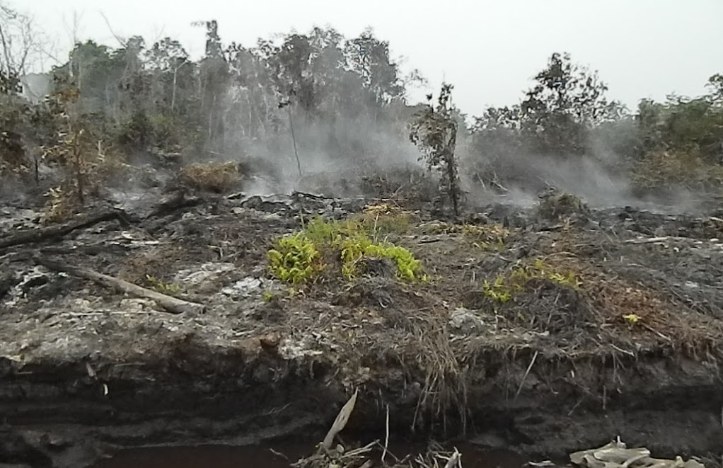 Ecologist Reza Lubis says he took this photo a smoldering peatland in PEAK's concession earlier this month. Photo courtesy of Wetlands International