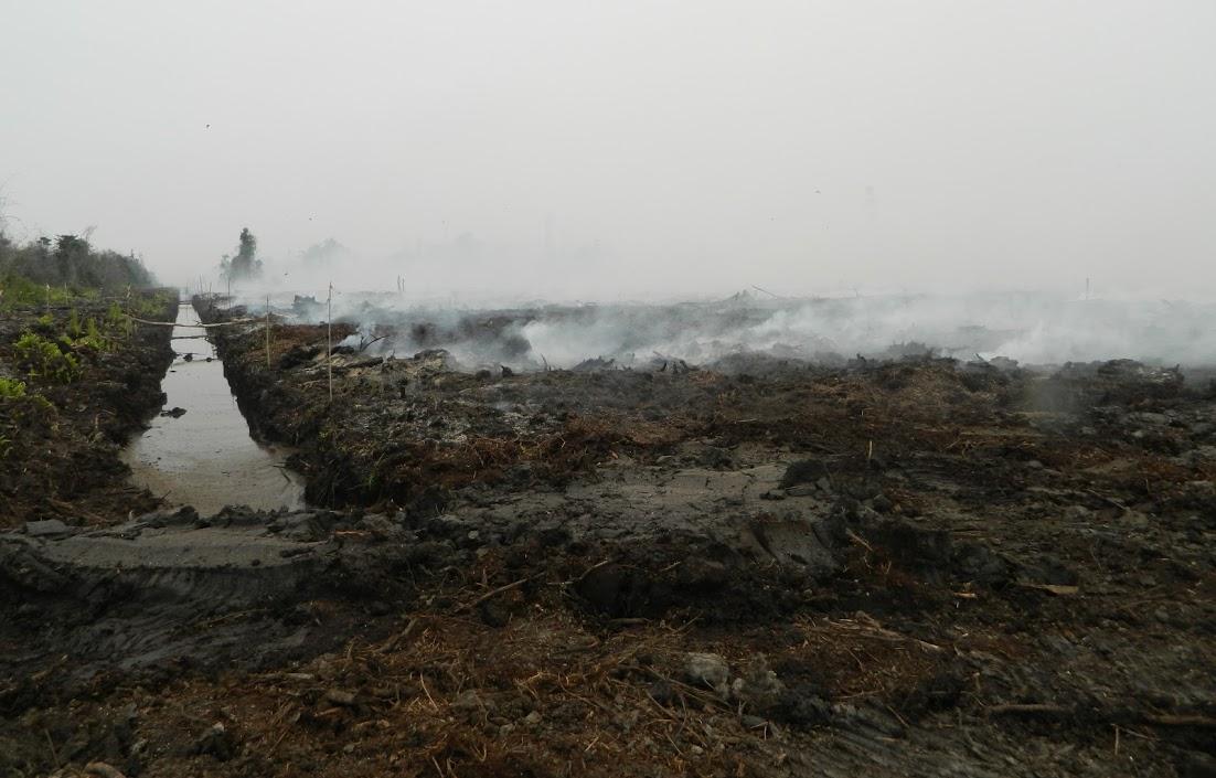 smoldering peat in PEAK's concession