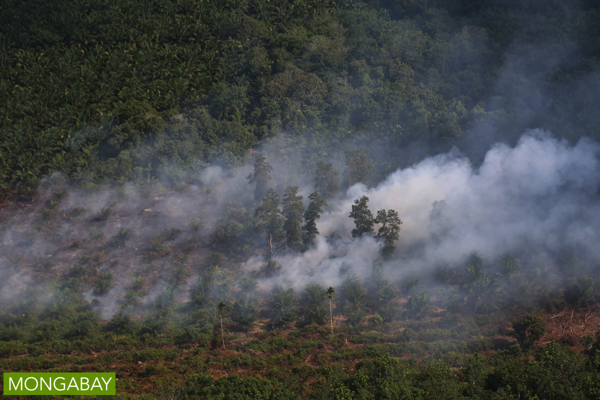 A peatland burns in Indonesia, spewing haze into the atmosphere. Photo by Rhett A. Butler