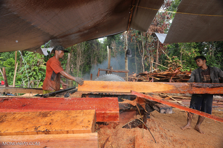 Illegal logging sawmill in Borneo. REDD+ critics say that it will be very difficult to monitor and stop illegal logging of tropical forests. Photo by Rhett Butler