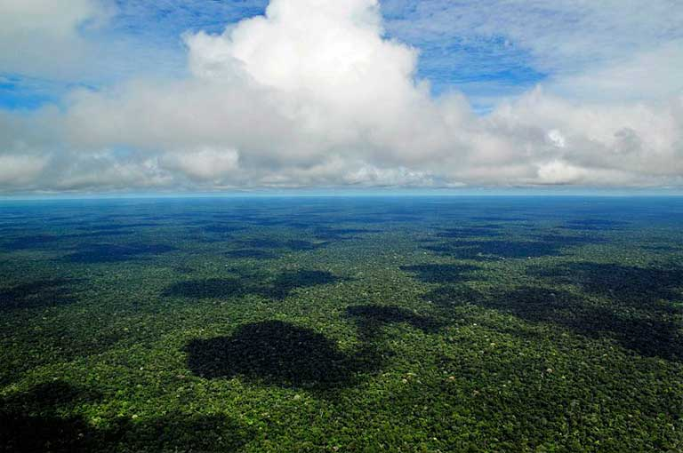 Maintaining tropical forests is critically important to sequestering carbon and curbing climate change. Photo by Neil Palmer/CIAT licensed under the Creative Commons Attribution-Share Alike 2.0 Generic license