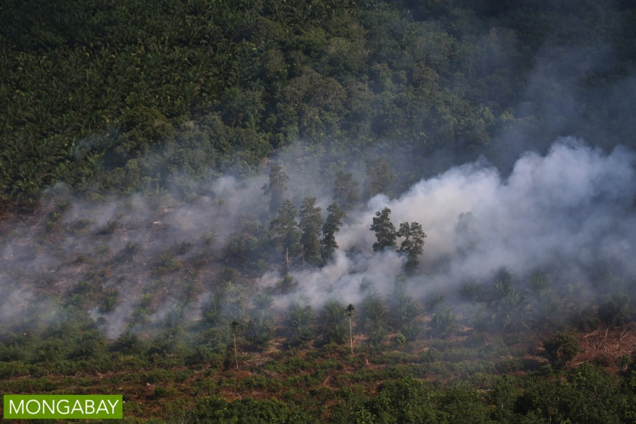 A landscape burns this year in Indonesia's Riau province. Photo by Rhett A. Butler