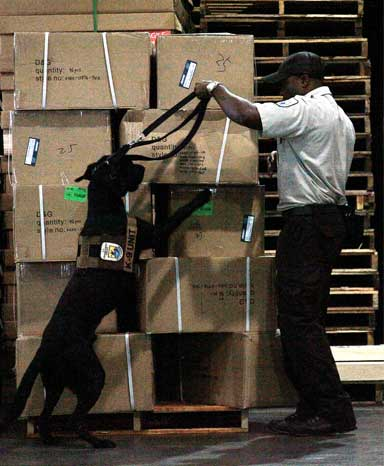 "USFWS ""sniffer"" inspection dog with its handler on the job in Miami. Sniffer dogs are invaluable in detecting illegal wildlife shipments, but are in short supply. Photo by Tom MacKenzie courtesy of USFWS"