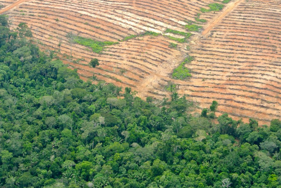 Ucayali Plantation. Photo courtesy of the Forest Peoples Programme.