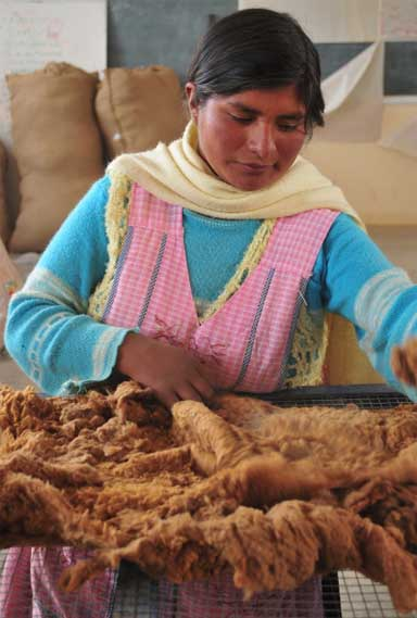 A master grader classifies vicuña fleeces. Photo by Daniel Maydana