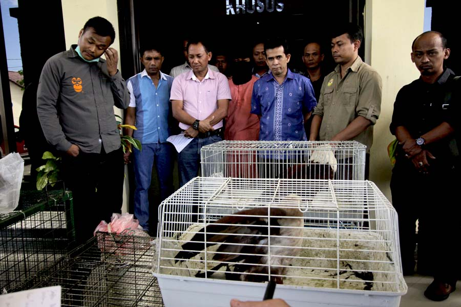 Rahmadani (red shirt), who was convicted last week of trafficking protected wildlife, is shown with law enforcement officials after his arrest in August. Photo by Junaidi Hanafiah